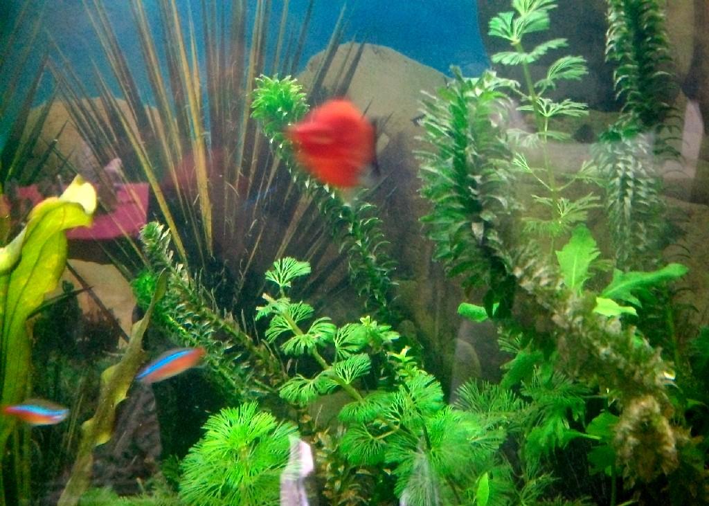 Disfrutando de una pecera tomar la palabra for Plantas para estanques de peces