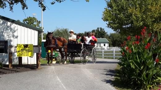 Yutong Amish